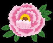 flower_botan