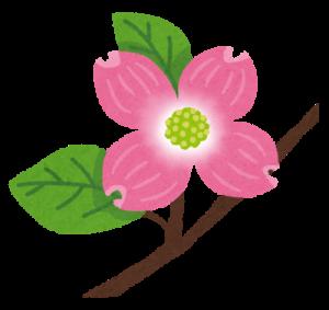 flower_hanamizuki